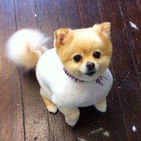 Dog Grooming Brentwood Tn